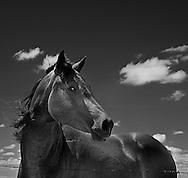 Horse southwest of Valentine Ne..Infrared...Photo by Chris Machian