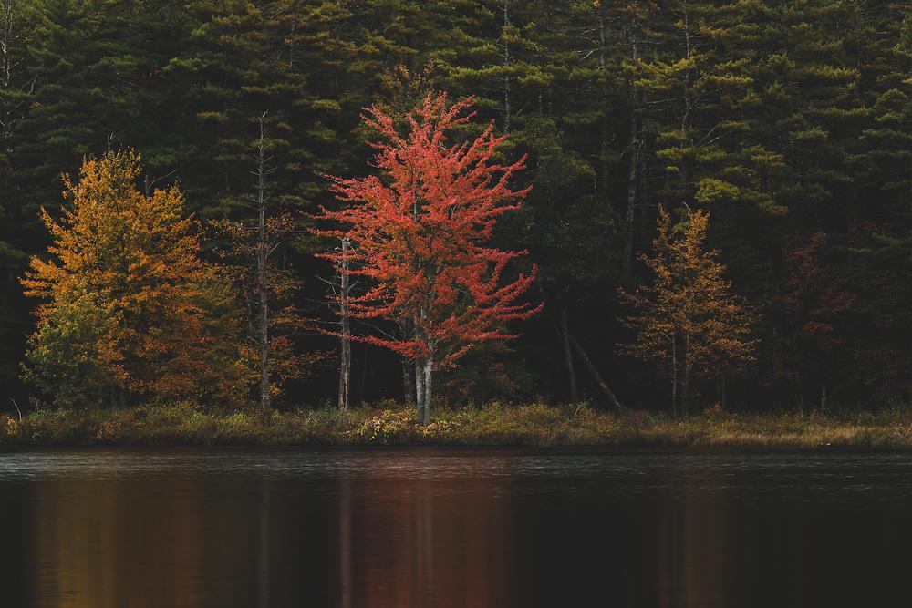 Fall foliage lining the edge of Tully Lake.