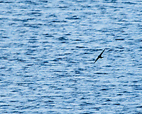 Swallow. Crystal Springs Waterfowl Production Area. Image taken with a Nikon D700 camera and 80-400 mm VR lens.