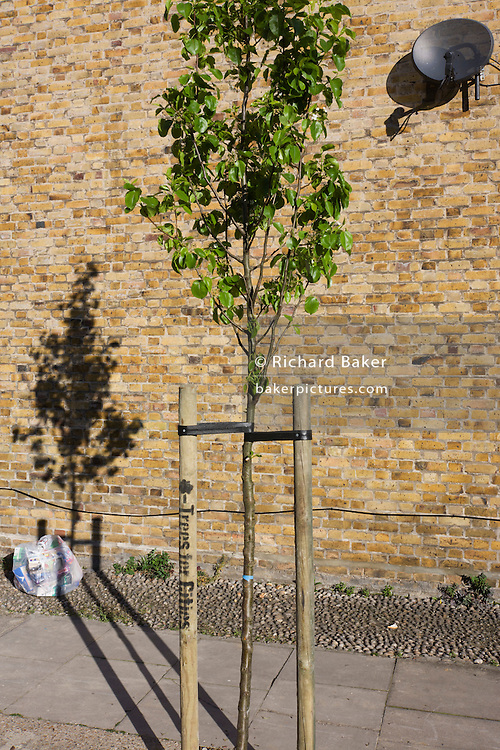 Bag of rubbish, sattelite dish and young growing tree with its shadow on an estate brick wall.