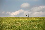 A wheat crop in central Kansas.  Photo by Dennis Brack