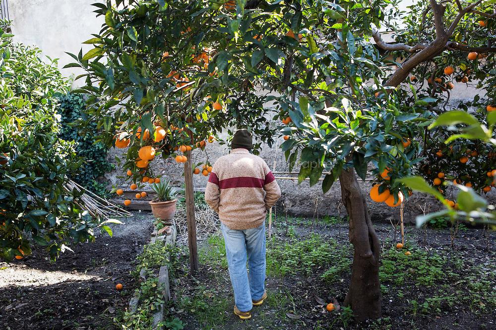 BARCELLONE POZZO DI GOTTO (ME), ITALIA - 20 FEBBRAIO 2015: Un ospite passeggia tra gli aranci del giardino della Casa di Solidarietà e di Accoglienza di Don Pippo Insana a Barcellona Pozzo di Gotto il 20 febbraio 2015.