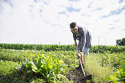 Mid adult man working in community garden, Bavaria, Germany