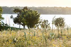 Sailboats on lake behind field of wildflowers and Arkansas yucca (Yucca arkansana), Blackland Prairie remnant, White Rock Lake, Dallas,Texas, USA