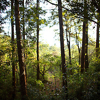 A hiking trail in a forest near Boquete, Panama.