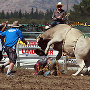 DJ Church from Waiouru is thrown from his bull during the Open Bull Ride at the Wanaka Rodeo. Wanaka, South Island, New Zealand. 2nd January 2012