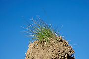 soil with some grass against a blue sky