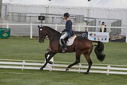 Blom Merel, NED, Ceda<br /> World Championship Young Eventing Horses<br /> Mondial du Lion - Le Lion d'Angers 2016<br /> © Hippo Foto - Dirk Caremans<br /> 20/10/2016