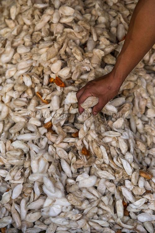 Silkworm cacoons<br /> Sohra Market, Cherrapunji<br /> Meghalaya,  ne India