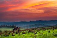 Horse grazing on a green mountin meadow at dusk