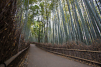 Chikurin-no-Michi or the Path of Bamboo is a long path of bamboo trees in Arashiyama behind Tenryuji Temple. The scene appears frequently on Japanese TV dramas and in Japanese movies, particularly those set in Kyoto.