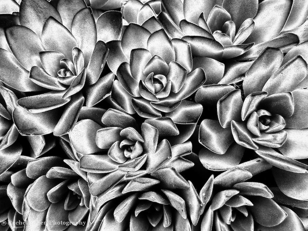 """""""Succulent Abstract"""""""
