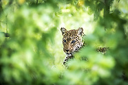 Best of Botswana Photo Safari Gallery