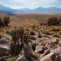 Photo of the semi-arid region. In the back you can see the immense plain called Pampa, and the graveled road we were driving ahead to another awesome landscape scenery.