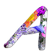 The Capitol Letter A Part of a set of letters, Numbers and symbols of 3D Alphabet made with colourful floral images on white background