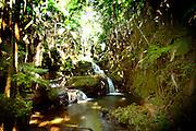 Onemea falls, Waterfall, Hawaii Tropical Botanical Garden, Onemea, Hamakua coast, Island of Hawaii