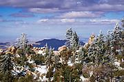 Rime ice on pines, San Bernardino National Forest, California USA