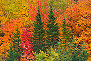Mixedwood forest in autumn<br />Saint-Pacôme<br />Quebec<br />Canada