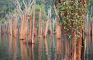 flooded trees in the rainforest, rio negro, amazonas, brazil