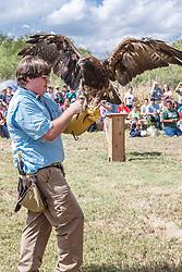 Showing Golden Eagle at Raptor Show by Last Chance Forever rehabilitation center, Mitchell Lake Audubon Center, San Antonio, Texas, USA.