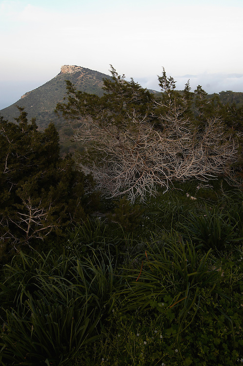 The mountain Moutti tis Sotiras, Akamas Peninsula, Cyprus