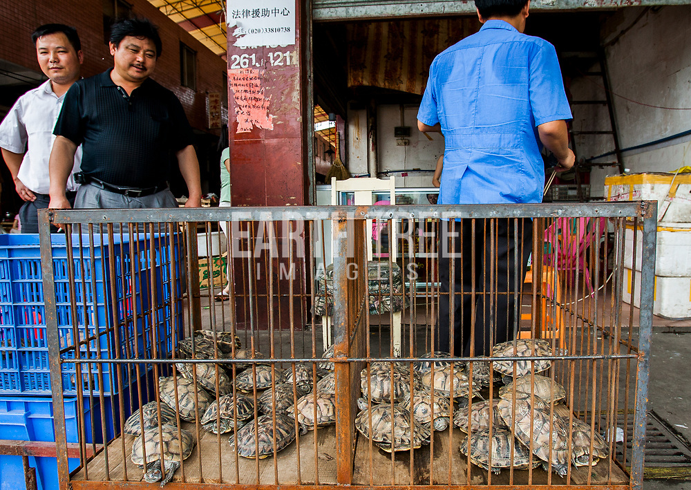 Turtles are consumed every year across China, Vietnam, Indonesia and other parts of Asia. Their shells are used in TCM, Traditional Chinese Medicine. Guangzhou, China. Photo: Paul Hilton / Earth Tree Images