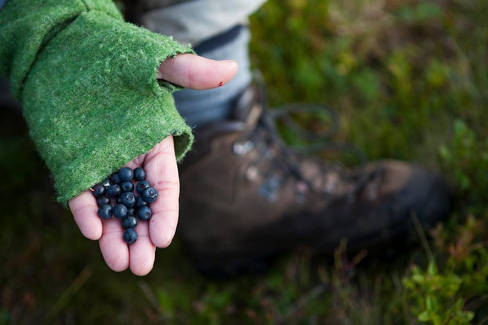Liana Welty holds up blueberries picked on a hike near Munkebu Hut on Moskenesoya, Lofoten Islands, Norway.