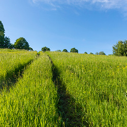 Tractor tracks in a hay field on Pearl Farm in Loudon, New Hampshire.