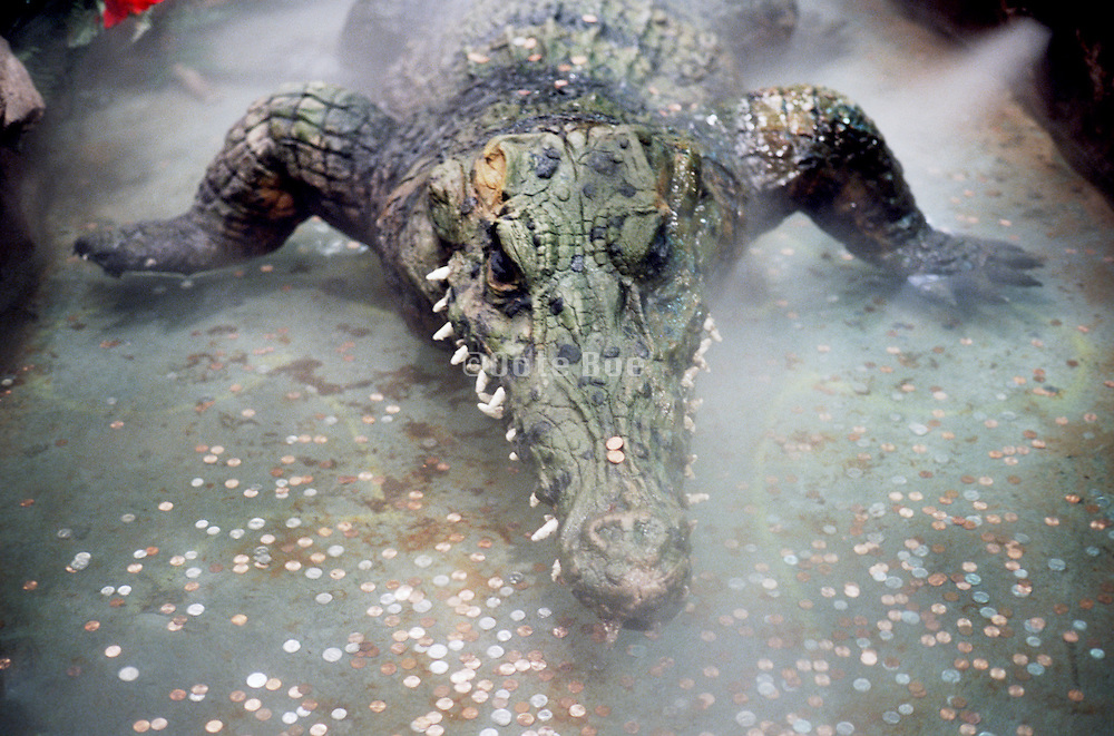alligator or crocodile with coins in fountain