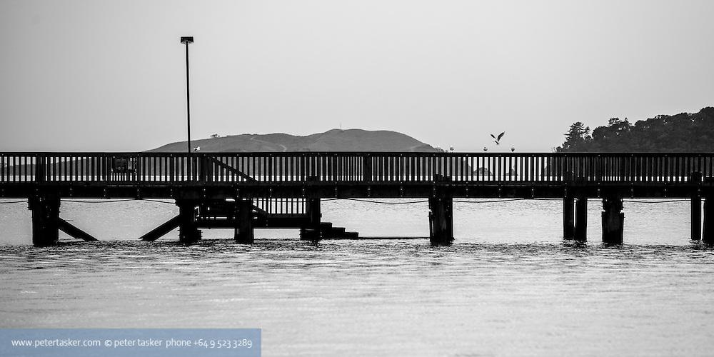 Wharf at Pohutukawa Bay, Waiheke Island. Seagull landing.  Winter.