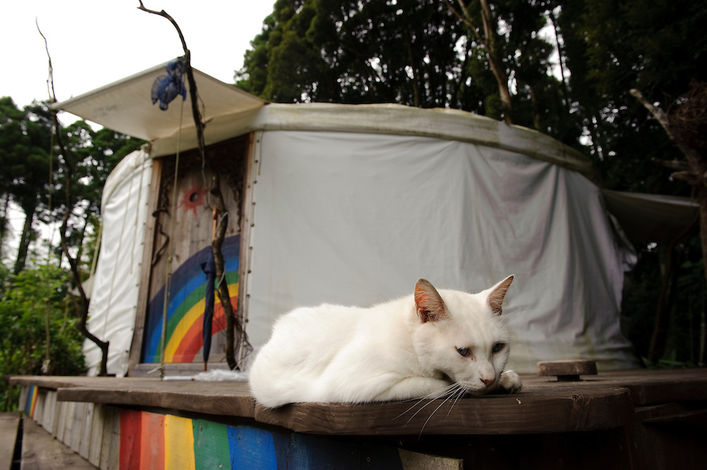 One of the farm cats, Brown's Field, Isumi, Chiba Prefecture, Japan, August 8, 2009.The organic farm introduces healthy and sustainable living in the Japanese countryside. It is staffed by the Brown family and volunteers from around the world.