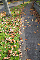 Fallen autumn leaves on suburban foot path in Dublin Ireland