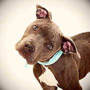 Better dog photos helping shelter dogs find homes.
