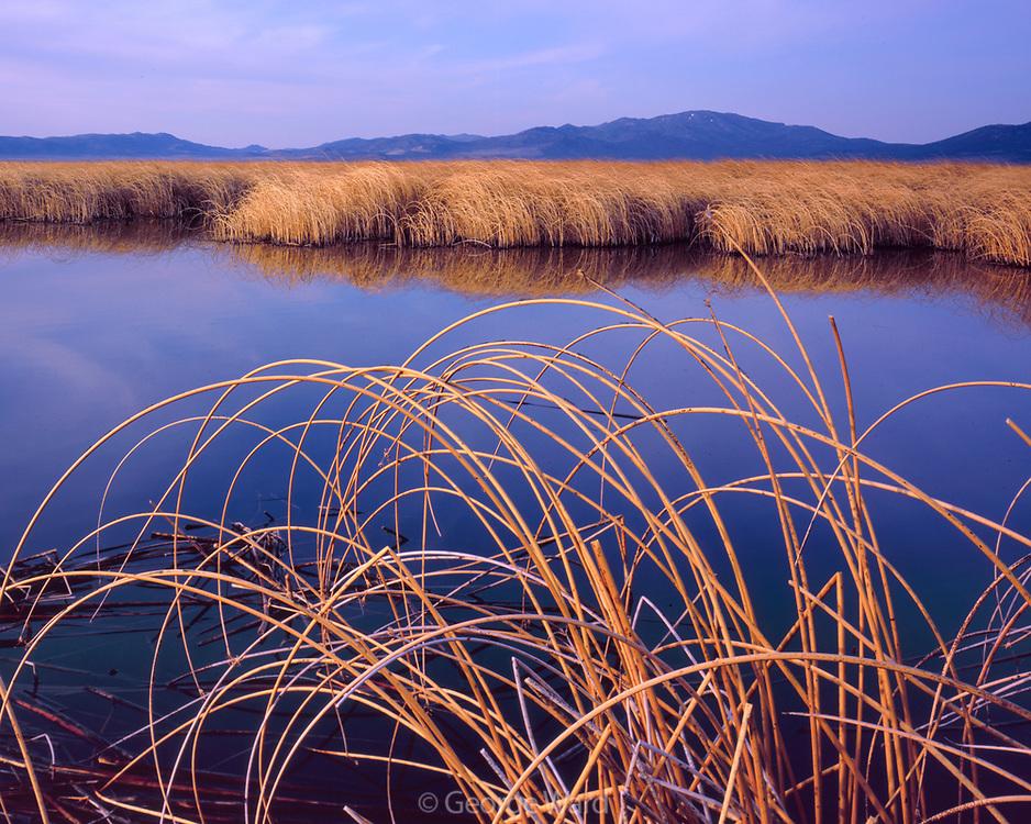 Reeds and Lake at Sunrise,Ruby Lake NationalWildlife Refuge, Nevada
