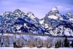 Frank Teasley, dog team, Grand Tetons, Grand Teton National Park, Jackson Hole, Wyoming,