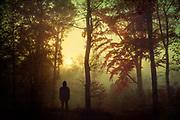 Autumn sun rise on a misty morning