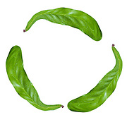 recycle logo created with three digitally enhanced leaves on white background