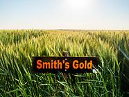 2020 Altus Wheat Variety Plots