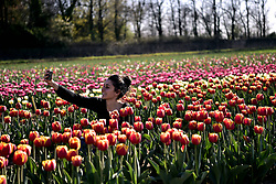 Italy, Arese - March 26, 2019.Young wiman takes a selfie in a tulip field (Credit Image: © Piaggesi/Fotogramma/Ropi via ZUMA Press)