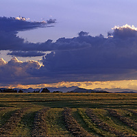 MONTANA. Hay fields south of Bozeman in southern Gallatin Valley.