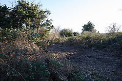 London, UK. 26th February, 2019. An overgrown area cleared for cultivation at Grow Heathrow, a squatted eco-community founded in 2010 on a previously derelict site close to Heathrow airport in protest against government plans for a third runway which was today partially evicted by bailiffs. The community has developed an extensive garden and is acknowledged to have made a significant educational and spiritual contribution to life in the Heathrow villages which are threatened by airport expansion. Bailiffs today evicted most of the front section of the site, owned by Imran Malik, removing several protesters locked on in towers above the camp, but four protesters are believed to remain in a tunnel beneath that area. Many more protesters remain on the rear portion of the site. Five legal challenges to the government's approval of a 3rd runway at Heathrow will proceed to judicial review at the Royal Courts of Justice on 10th March.