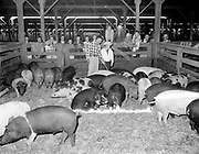 "ackroyd-08537-3. ""Portland Union Stockyards. 4-H Club Tour. September 5, 1958"""