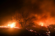 The Blue Cut wildfire burns the structures near Cajon Pass, north of San Bernardino, Calif., August 16, 2016. The fire is currently 9,000 plus acres, with 700 personnel on scene. Fifty-seven engines, 8 crews, 8 air tankers, 2 Very Large Air Tankers (VLATS), with additional firefighters and equipment on order. There is imminent threat to public safety, rail traffic and structures. With this being a very quickly growing wildfire, evacuation instructions have been issued. An estimated 34,500 homes and 82,640 people are being affected by the evacuation warnings.  AFP PHOTO / Ringo Chiu