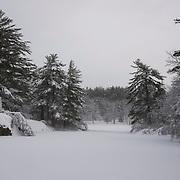 Fresh snow on Pearce Lake in Breakheart Reservation, Wakefield, MA