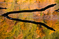 Branches outline and water reflection on the Proscansko lake water surface, Upper Lakes, Plitvice National Park, Croatia