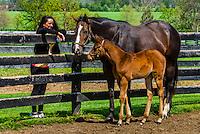 Throughbred mare and foal, Winstar Farm, Versailles (Lexington), Kentucky USA.