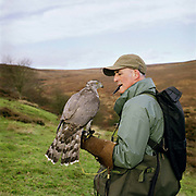 John Callahan holding a goshawk on Spaunton Moor, North York Moors National Park, North Yorkshire, UK