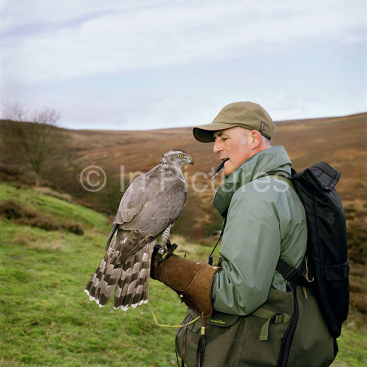John Callahan holding a goshawk on Spaunton Moor, North York Moors National Park, North Yorkshire, UK