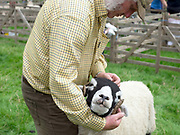 Hill farmer Andy Fawbert showing his Swaledale sheep at Farndale Show on 28th August 2017 in North Yorkshire, United Kingdom. Farndale Show is a small traditional agricultural show in the heart of the North York Moors photo by Tessa Bunney/In Pictures via Getty Images