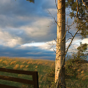 A whispering wind and changing sky late one day in Loudoun County, Virginia